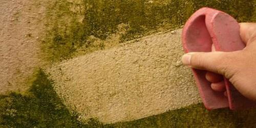 chống thấm rêu mốc