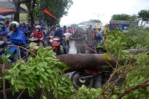 mưa bão làm đổ cây