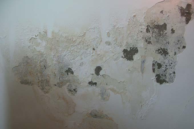 Vật liệu chống thấm tường trong nhà