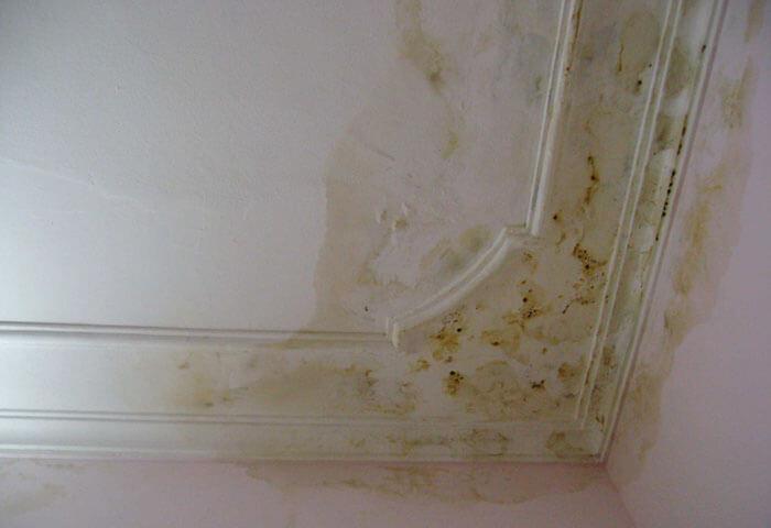 Chống thấm dột trần nhà