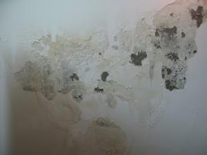 chống thấm tường