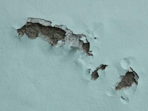 sơn tường bị bong tróc từng mảng