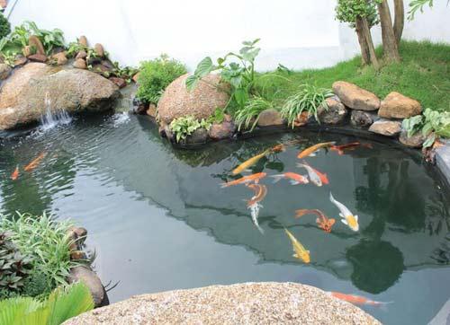 chống thấm hồ nuôi cá cảnh bằng Mariseal 300