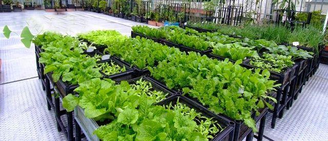 Dịch vụ chống thấm chovườn sân thượng, vườn ban công