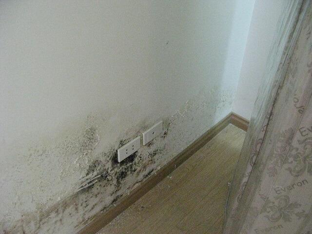 Sự nguy hiểm khi nấm mốc tường nhà